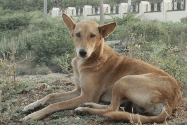 महाराष्ट्र : 90 कुत्तों के शव मिले, नगर निकायों पर जांच की आंच