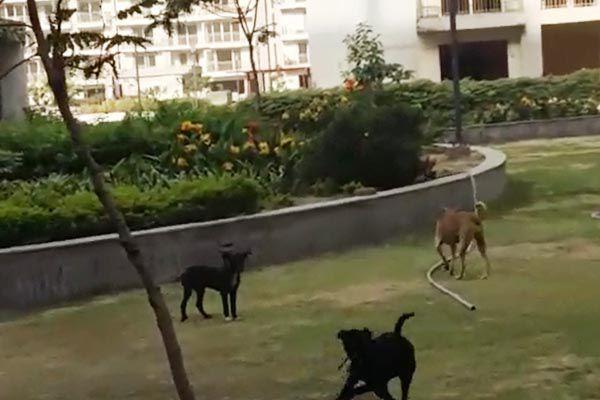 dog fear in ghaziabad - Ghaziabad News in Hindi