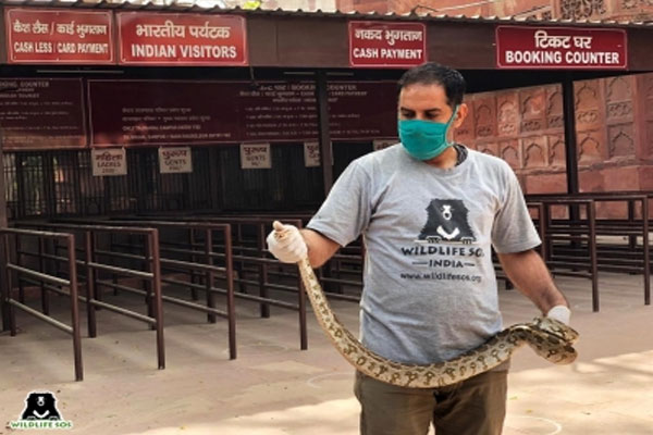 Stirred by seeing python near the ticket counter of Taj Mahal - Agra News in Hindi
