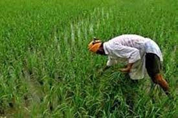 Roots Foundation plan - to benefit more than 20 lakh paddy farmers by 2022 - Delhi News in Hindi