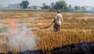 Punjab appoints 8,500 nodal officers to monitor stubble burning - Punjab-Chandigarh News in Hindi