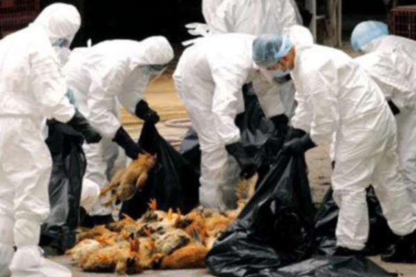 Bird flu threat in Madhya Pradesh, alert issued - Bhopal News in Hindi