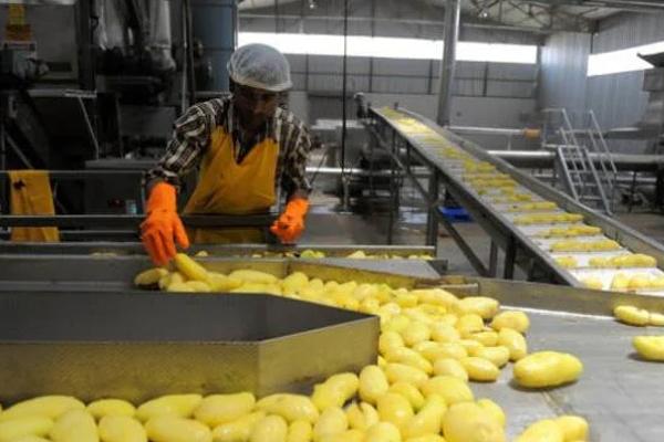 UP में फूड प्रोसेसिंग फैक्ट्रियों के लिए निवेश बढ़ा, 101 इकाइयां खुली, 38 पर काम तेज