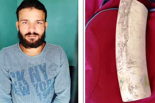 Gangster arrested for trafficking wildlife in Jaipur, ivory found - Jaipur News in Hindi