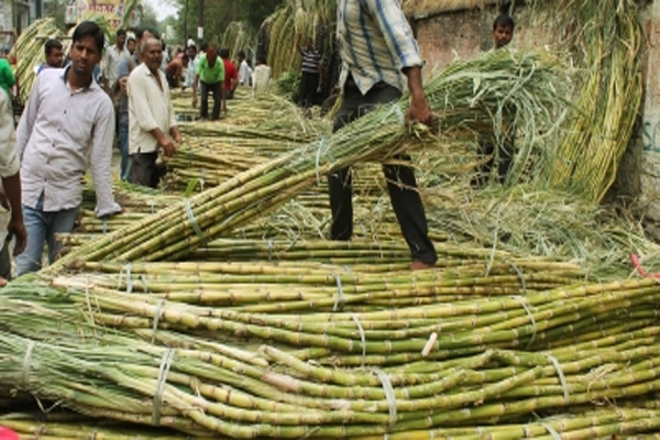 Yogi government made record payment to sugarcane farmers - Lucknow News in Hindi