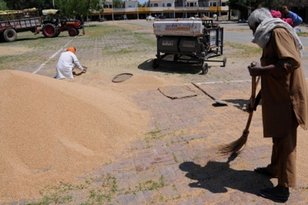 UP government built 6000 wheat procurement centers for farmers - Lucknow News in Hindi