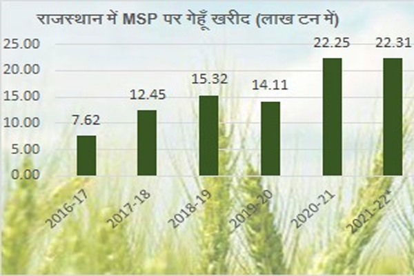 FCI in Rajasthan achieved the target by purchasing 12.33 percent more wheat than last year - Jaipur News in Hindi