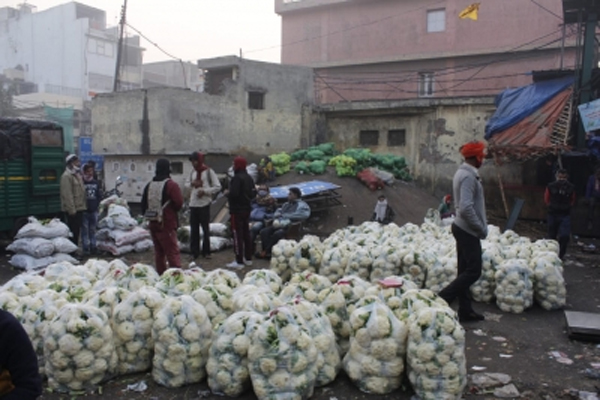Farmer throws 10 quintals of cauliflower in UP, - Pilibhit News in Hindi