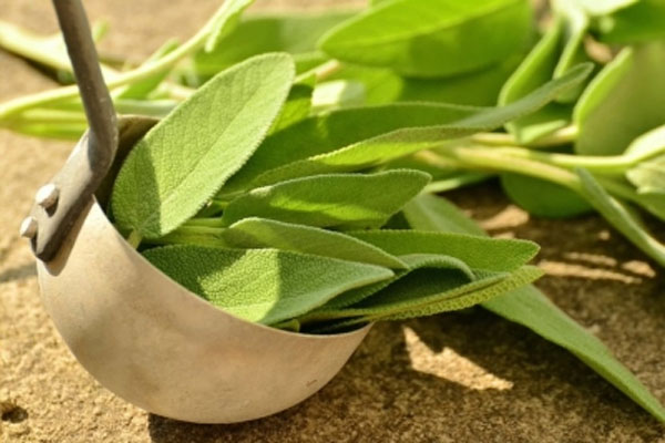 Emphasis on promoting herbal farming along the Ganges in Uttar Pradesh - Lucknow News in Hindi