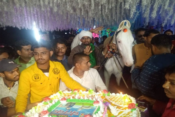 बिहार : घोड़े का मना जन्मदिन, मालिक ने 50 पाउंड का काटा केक, दी पार्टी, देखें तस्वीरें