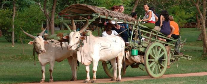 what is this! Here the fare of bullock cart is more expensive than airplane, know the reason - Weird Stories in Hindi