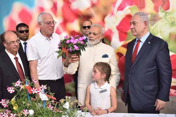 New Israeli flower Crysanthumun named after Narendra Modi - World News in Hindi