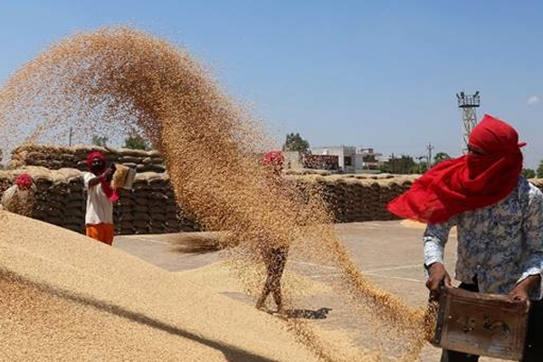Know which states bought how much wheat for the central pool - India News in Hindi