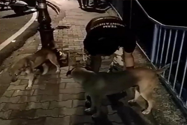 Salman Khan arrested for throwing a dog in a pond - Bhopal News in Hindi