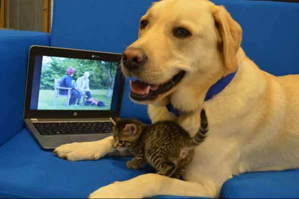 Labrador Adopts Abandoned Kitten in london - Wonders News in Hindi