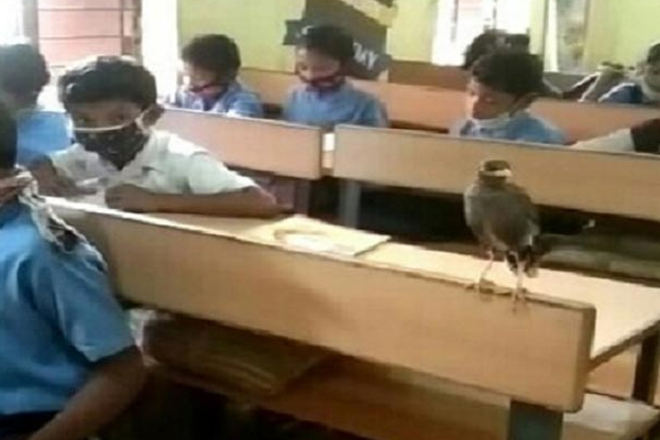 The 32nd student of this school is a bird, people come from far and wide to see - Weird Stories in Hindi