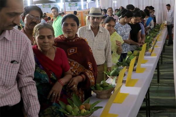 राजस्थान के पहले मेंगो फेस्टिवल का बांसवाड़ा में सफल आयोजन