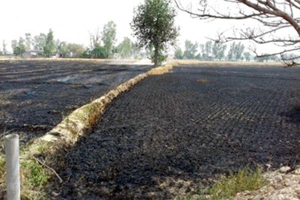 साढ़े आठ एकड़ में लगी आग, गेहूं की फसल जलकर राख