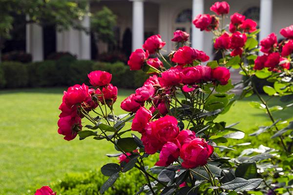 गुलाब को छोड़कर कोई भी कांटेदार पौधे घर में नहीं लगाना चाहिये अन्यथा...