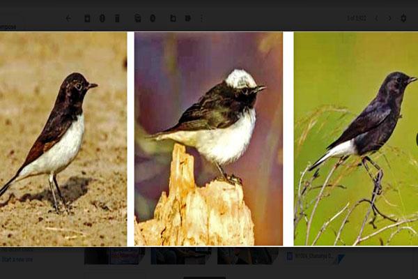 उदयपुर में लॉकडाउन के दौरान पक्षी विशेषज्ञों की अनूठी पहल, यहां पढ़ें