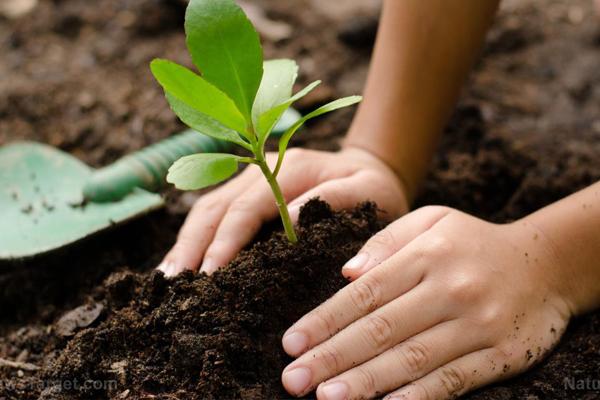 घर-घर औषधीय पौधे उगाने के सात सहज सूत्र