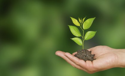 21 March International Forest Day, give a sapling as a gift and make the world a better place - Delhi News in Hindi