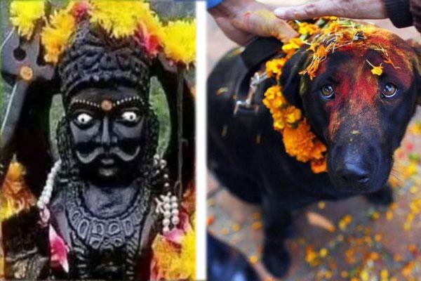 शनि देव को खुश करने के लिए काले कुत्ते को खिलाये चुपड़ी रोटी, बिजनेस, व्यापर में होगा लाभ