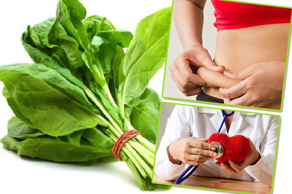 Spinach have many benefits for health - Health Tips in Hindi
