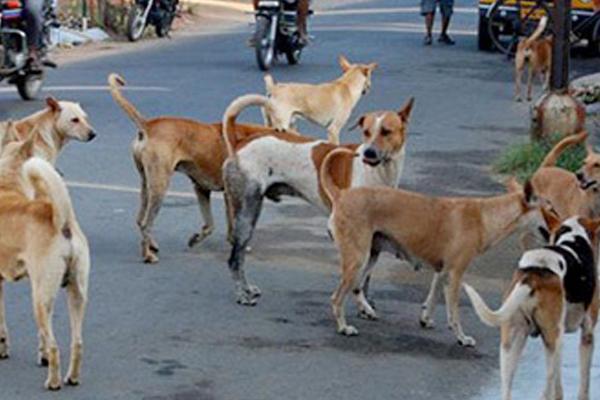 उप्र : आवारा कुत्तों ने मासूम को मार डाला
