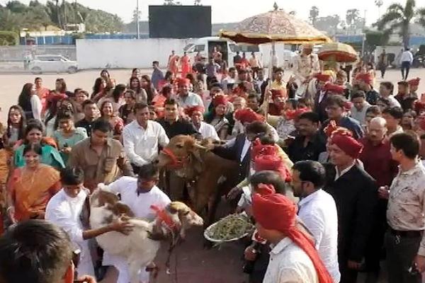 दूल्हे ने CAA के समर्थन में लगाई मेहंदी, गाय हुई बारात में शामिल, यहां जानिए सूरत की अनोखी शादी