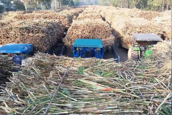 Sugarcane price in Haryana is Rs 350 per quintal - Chandigarh News in Hindi