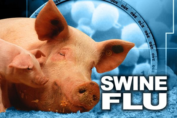 Cases of swine flu, administration of the preparation of defense - Ludhiana News in Hindi