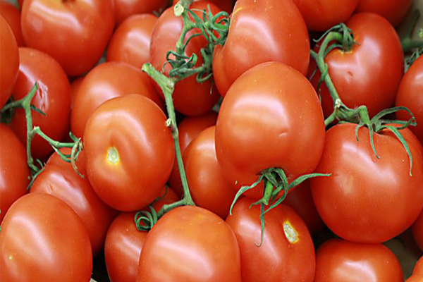 UP farmers exported 30 metric tons of green chillies, tomatoes to Bangladesh, Nepal - Lucknow News in Hindi