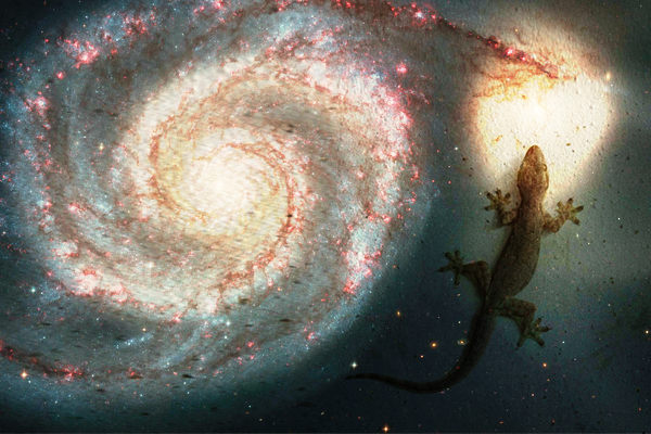 The lizard also gives information about future events - Jyotish Nidan in Hindi