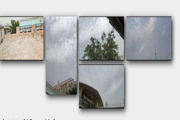 Locust teams were seen in many parts of Gurugram - Gurugram News in Hindi