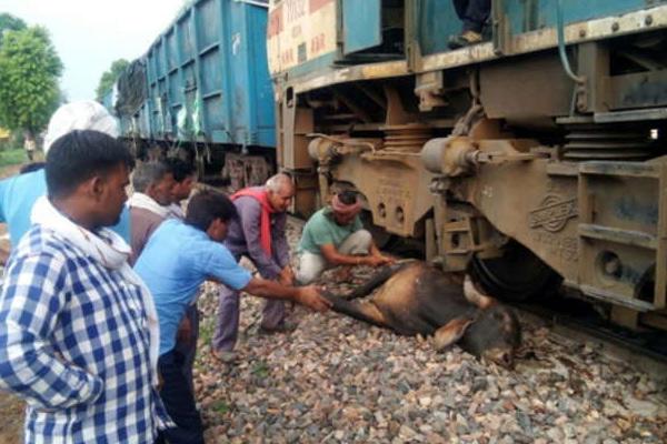 सांड ने रोका जयपुर-दिल्ली-आगरा पर रेलवे यातायात, एक घंटे जाम रहा