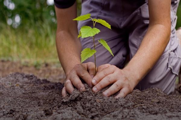 एक बच्चा एक पौधा लगाएगा, प्रोत्साहन राशि भी मिलेगी-सीएम खट्टर