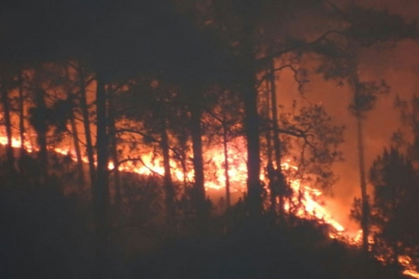 Uttarakhand: Rain can reduce the incidence of forest fire - Dehradun News in Hindi