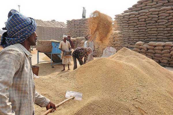 पंजाब ने 125 मिट्रिक टन गेहूं की खरीद की