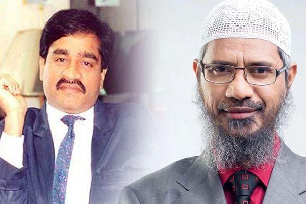 Zakir Naik,s NGO was receiving money from Dawood Ibrahim,s D company, ED probing - Mumbai News in Hindi