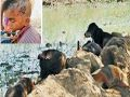 Mohali: Dogs attacked 7-year-old child