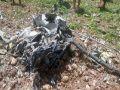 kangra news : MiG 21 of Air Force crashed in Himachal Pradesh, pilot dies