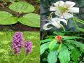Himachal Pradesh emphasizes on cultivation of medicinal plants