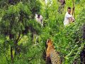 Why is the false story of Tiger attack in the country second largest Tiger Reserve, the village?