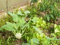 Women in malnutrition away from kitchen garden in Jharkhand