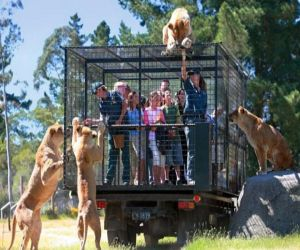 World most dangerous zoo, where tourists go imprisoned in cages - Hindi News